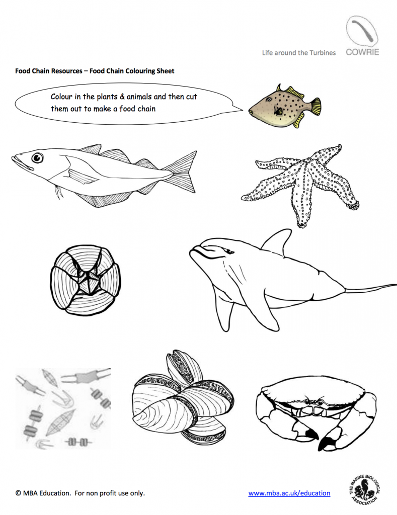 Classroom Resources   World Ocean Day for Schools